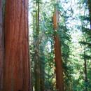 Национальный парк Секвойя (США, Калифорния)