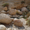 Эйн-Геди (Израиль, Иудейская пустыня)