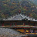 October 5–16, 2011. Trip to South Korea.
