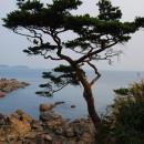 Сокчо (Республика Корея)