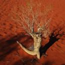 Национальный парк Улуру — Ката Тьюта (Австралия)