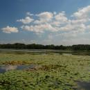 Акатовское  (Свадицкое) озеро (Смоленская область)