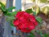 Сад кактусов в Кибуце Маган Михаэль