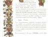 Сертификата о паломничестве в Сантьяго-де-Компостела