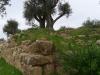 HEBRON-MACHPELAS-TOMB-23