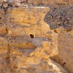 Неопалимая купина, (фото из botinok.co.il)