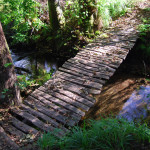 Bridge in the wood