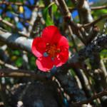 Flowers on Camino (1)