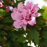 Цветы на Камино (2)