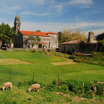 Rural scenery with a church and sheep